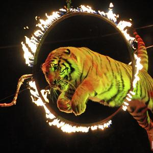 Цирки Басьяновского