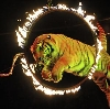 Цирки в Басьяновском