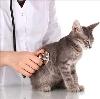 Ветеринарные клиники в Басьяновском